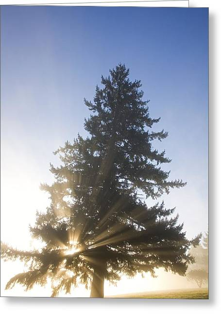 Foggy Day Greeting Cards - Tree And Sunlight, Willamette Valley Greeting Card by Craig Tuttle