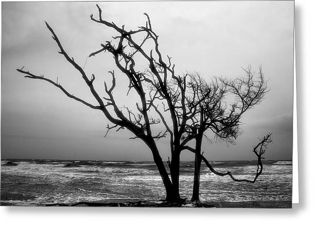 Storm Prints Photographs Greeting Cards - Tree and Surf Greeting Card by Steven Ainsworth