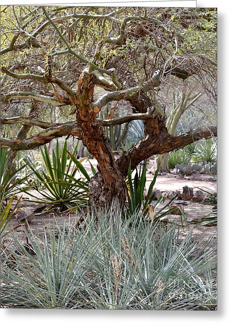 Photos Of Trees Greeting Cards - Tree and Yucca Greeting Card by Rebecca Margraf