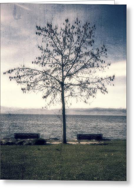 Lake Constance Greeting Cards - tree at lake Constance Greeting Card by Joana Kruse