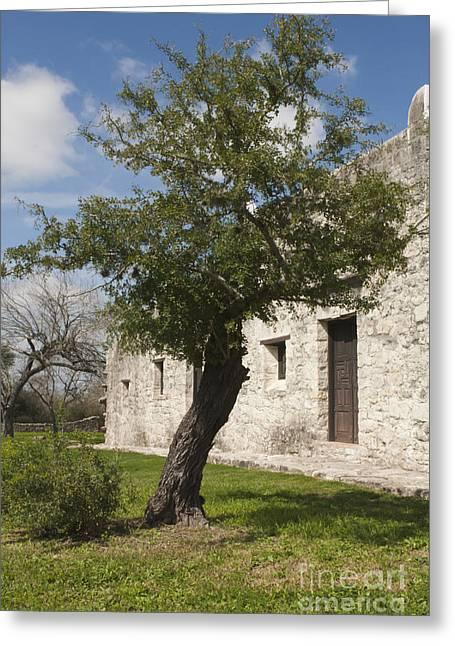 Goliad Texas Greeting Cards - Tree at the Espiritu Santo Greeting Card by Kim Henderson