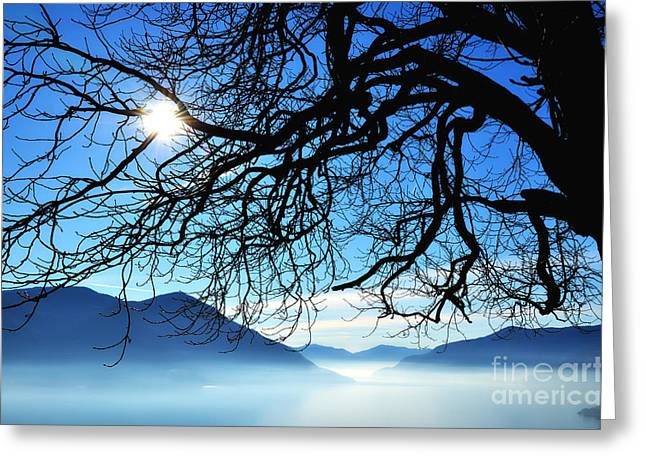 Tree Branches And Sun Greeting Card by Mats Silvan