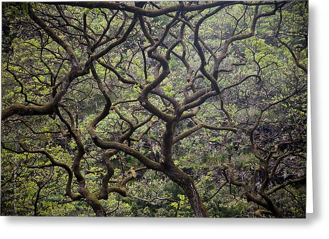 Lush Green Greeting Cards - Tree Branches Form An Abstract Pattern Greeting Card by Taylor S. Kennedy