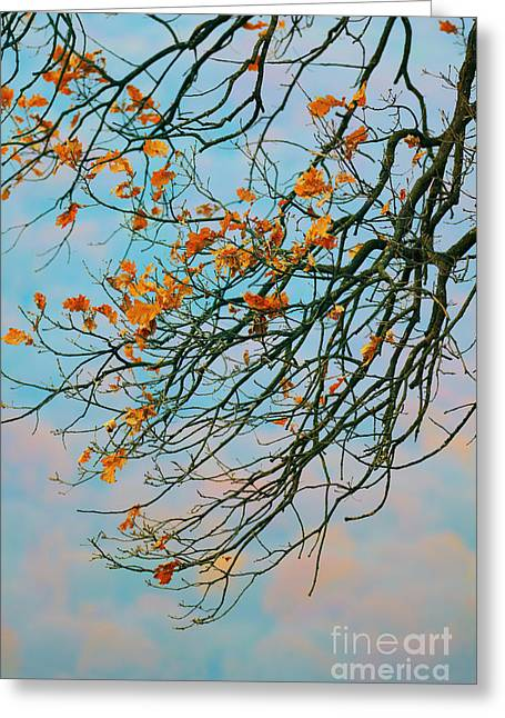 Bare Oak Tree Greeting Cards - Tree branches in autumn Greeting Card by Gabriela Insuratelu