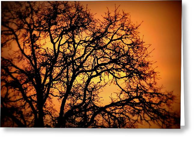 Spritual Light Greeting Cards - Tree Bursting With Setting Sun Greeting Card by Cindy Wright