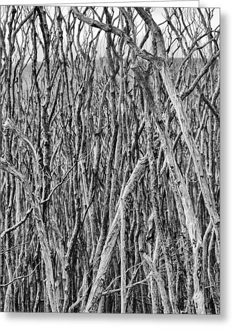 Tidal River Greeting Cards - Tree Cemetery V2 Greeting Card by Douglas Barnard