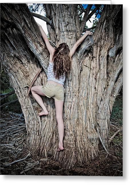 Climb Tree Greeting Cards - Tree climber Greeting Card by Scott Sawyer