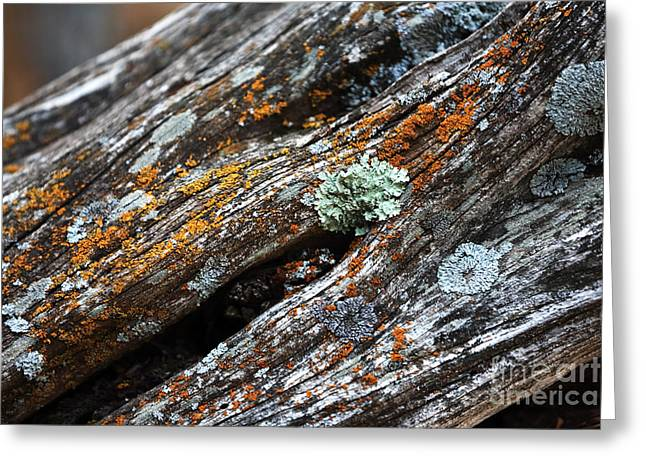 Forest Dweller Greeting Cards - Tree Colors Greeting Card by John Rizzuto