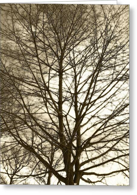 Mohawk Park Greeting Cards - Tree Cover in Sepia Greeting Card by Corinne Elizabeth Cowherd