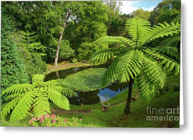 Lush Colors Greeting Cards - Tree ferns Greeting Card by Gaspar Avila
