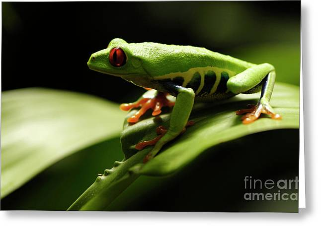 Tree Frog Greeting Cards - Tree Frog 13 Greeting Card by Bob Christopher