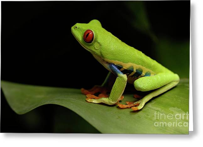 Tree Frog 14 Greeting Card by Bob Christopher