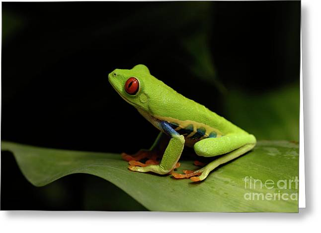 Tree Frog Greeting Cards - Tree Frog 15 Greeting Card by Bob Christopher
