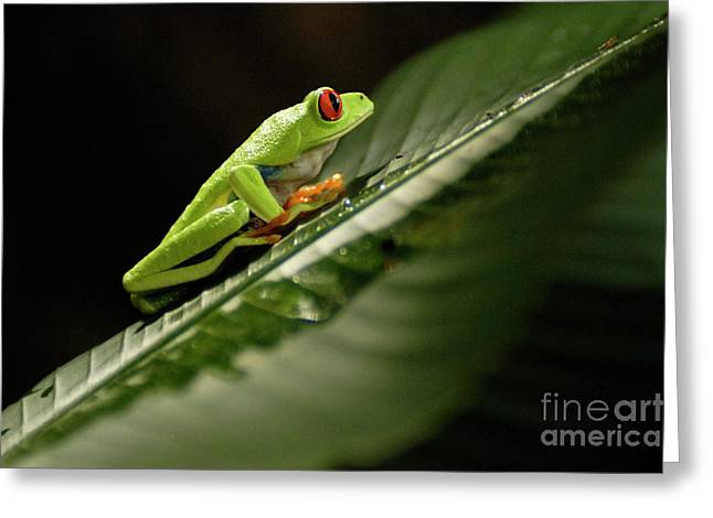 Tree Frog Greeting Cards - Tree Frog 2 Greeting Card by Bob Christopher