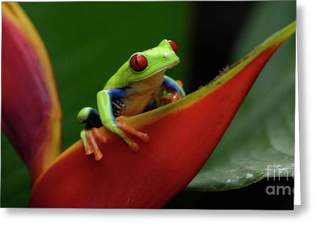 Tree Frog Greeting Cards - Tree Frog 22 Greeting Card by Bob Christopher