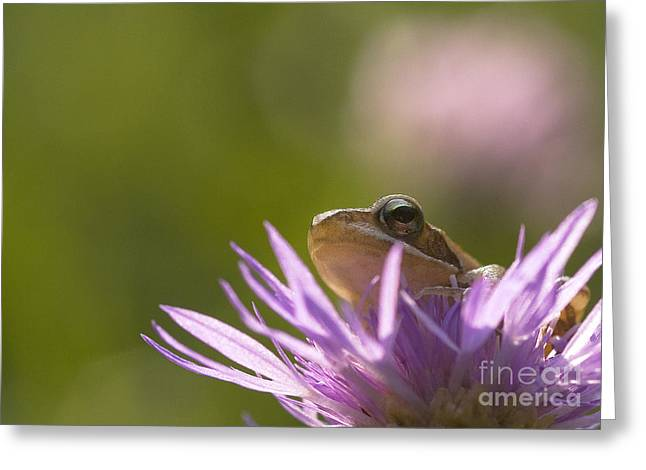 Sticky Fingers Greeting Cards - Tree-frog on a flower  Greeting Card by Odon Czintos