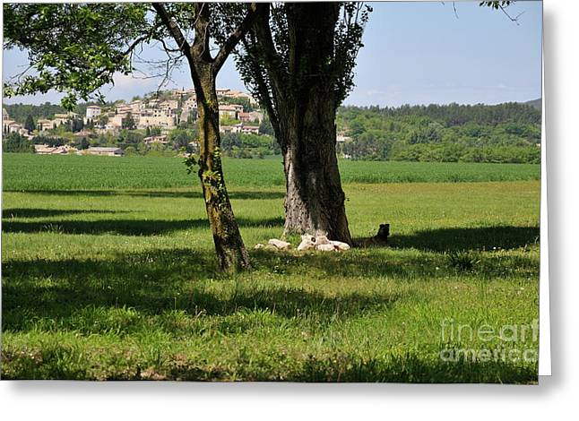 Provence Village Greeting Cards - Tree in  a field with Vallauris village Greeting Card by Sami Sarkis