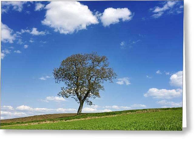 Fertility Greeting Cards - Tree in a french landscape Greeting Card by Bernard Jaubert