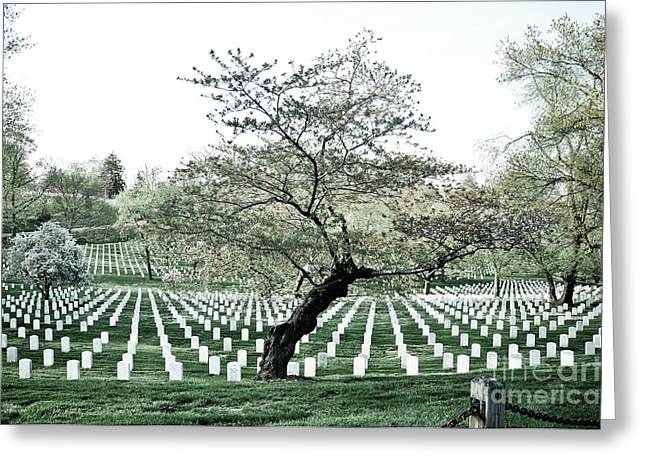 Arlington Photographs Greeting Cards - Tree in Arlington Cemetery  Greeting Card by Scott Sawyer
