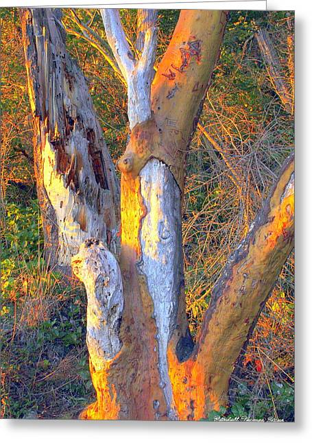 Tree In The Sunset Greeting Card by Randall Thomas Stone