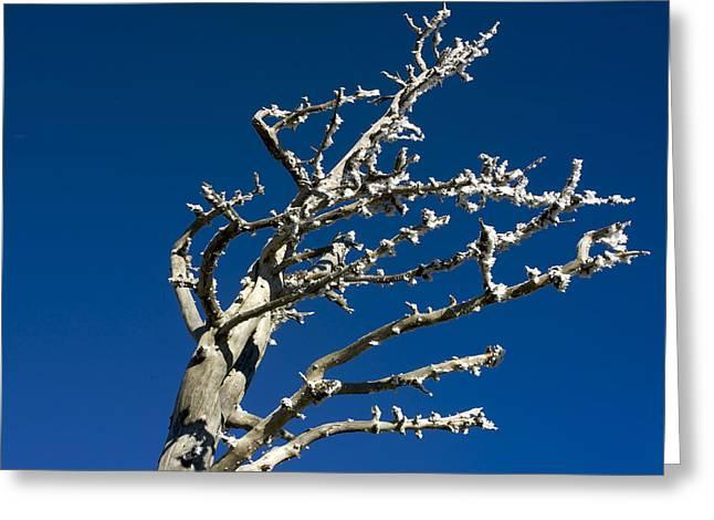 Tree in winter against a blue sky Greeting Card by BERNARD JAUBERT