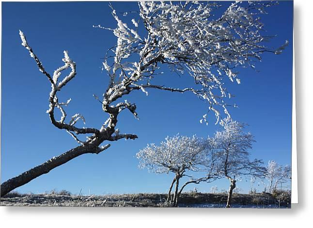 Bare Trees Greeting Cards - Tree in winter Greeting Card by Bernard Jaubert