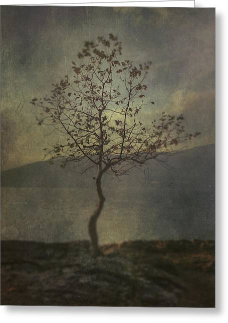 Edge Greeting Cards - Tree Greeting Card by Joana Kruse