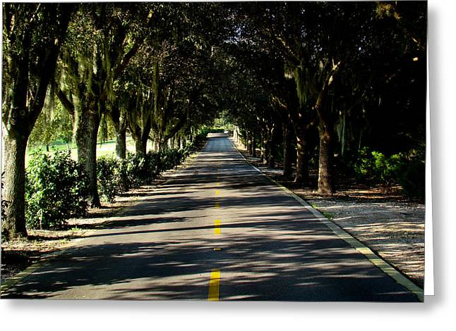Tree-lined Greeting Card by Dennis Dugan