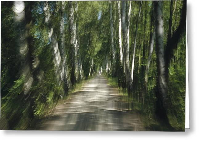 Oberbayern Greeting Cards - Tree Lined Road Abstract  Greeting Card by Konrad Wothe