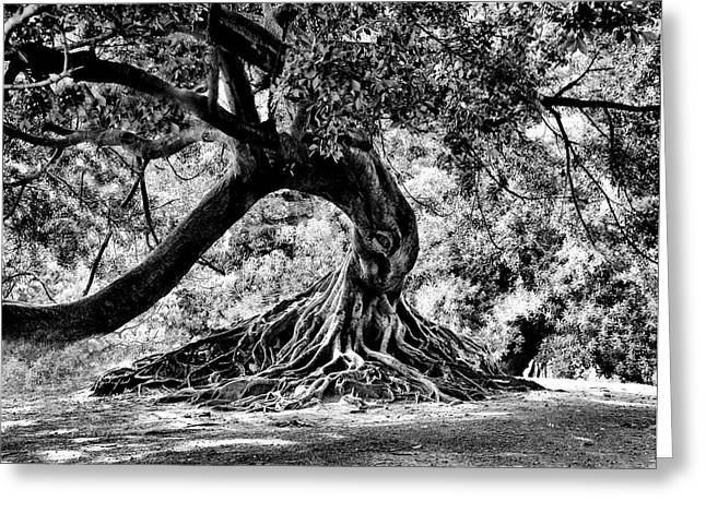 Tree Roots Greeting Cards - Tree Of Life - BW Greeting Card by Kenneth Mucke