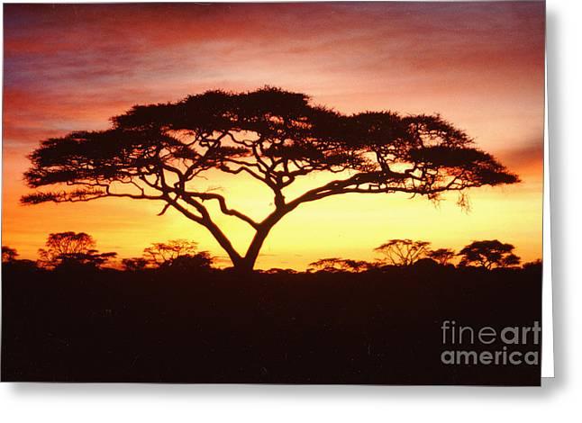 Jerome Stumphauzer Greeting Cards - Tree of Life Africa Greeting Card by Jerome Stumphauzer