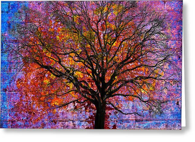 Tree of Life Greeting Card by David Clanton