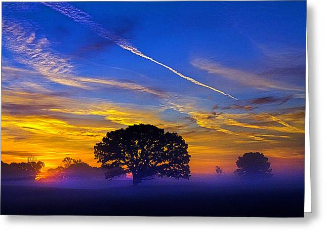 Twilight Greeting Cards - Tree of Life Greeting Card by Phil Koch