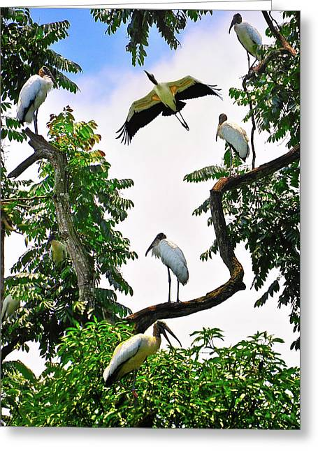 Toucan Print Greeting Cards - Tree of Storks  Greeting Card by Harry Spitz