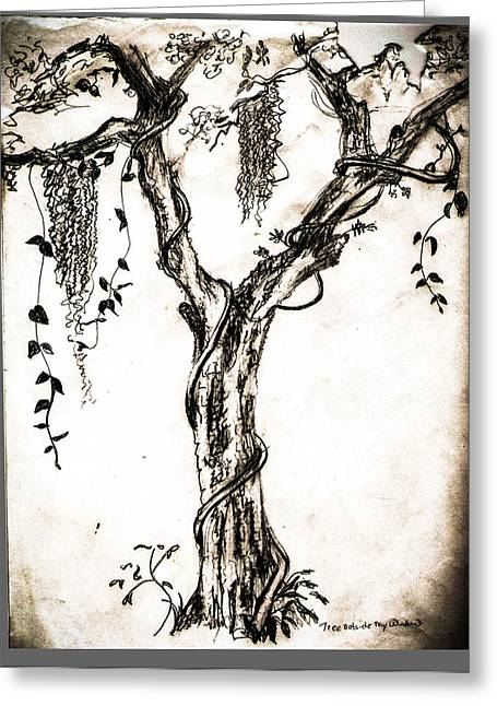 Moss Drawings Greeting Cards - Tree Outside My  Greeting Card by Christy Usilton