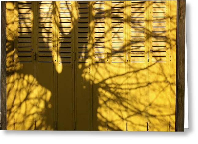 Bare Tree Greeting Cards - Tree shadow Greeting Card by Bernard Jaubert