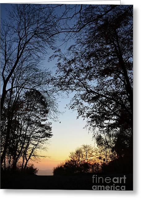 Colourfully Greeting Cards - Tree Silhouette at Sunset 1 Greeting Card by Bruno Santoro