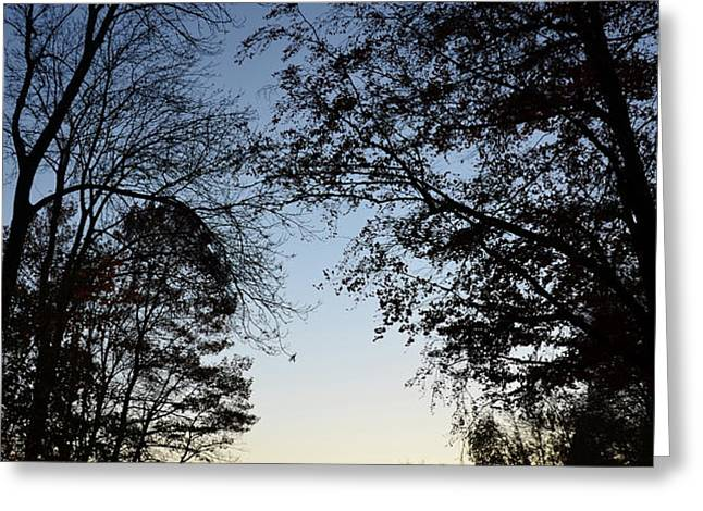 Tree Silhouette at Sunset 1 Greeting Card by Bruno Santoro