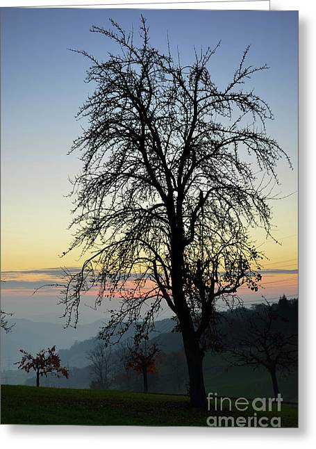 Colourfully Greeting Cards - Tree Silhouette at Sunset 2 Greeting Card by Bruno Santoro