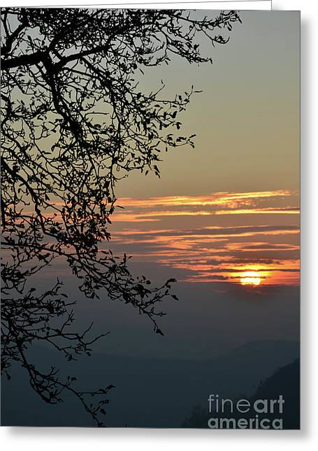 Colourfully Greeting Cards - Tree Silhouette at Sunset Greeting Card by Bruno Santoro