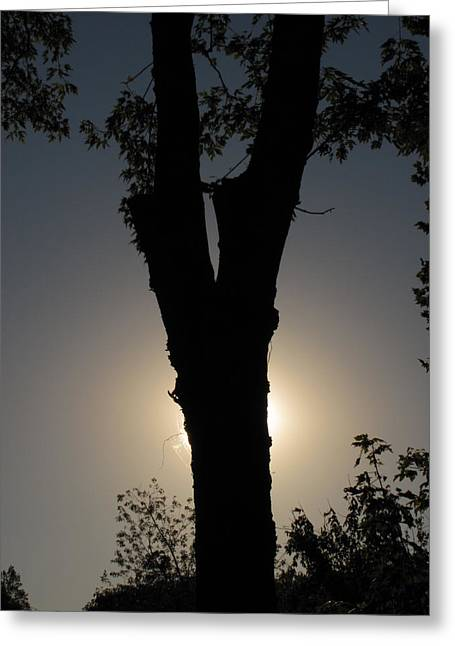 Shane Brumfield Greeting Cards - Tree Silhouette Greeting Card by Shane Brumfield