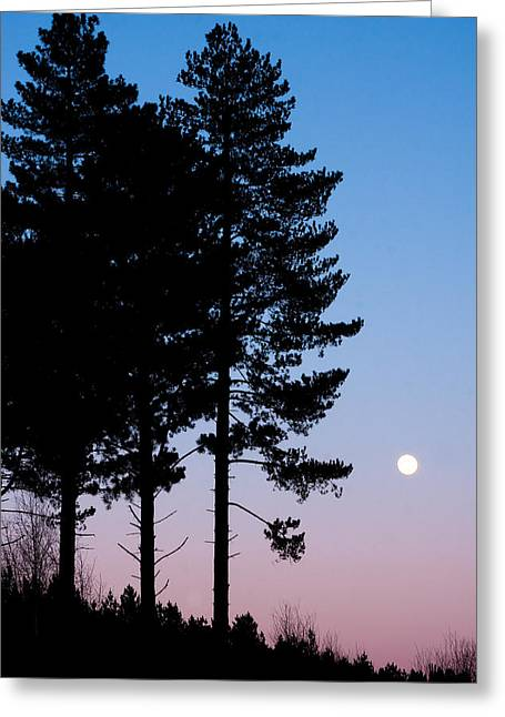 Origin Greeting Cards - Tree Silhouette Greeting Card by Tom Gowanlock
