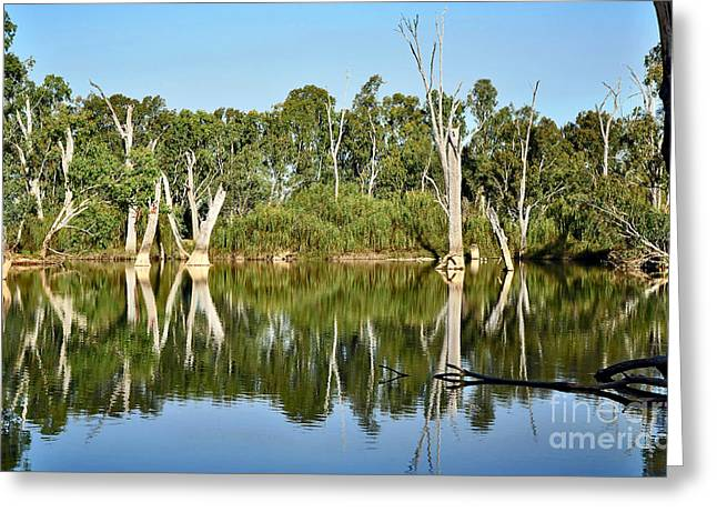 Reflections In River Greeting Cards - Tree Stumps in the River Greeting Card by Kaye Menner