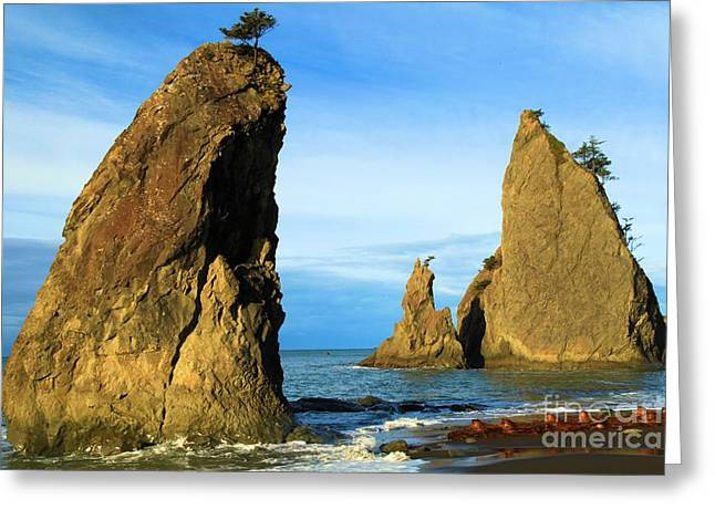 Beaches In Washington Greeting Cards - Tree-Top Greeting Card by Adam Jewell