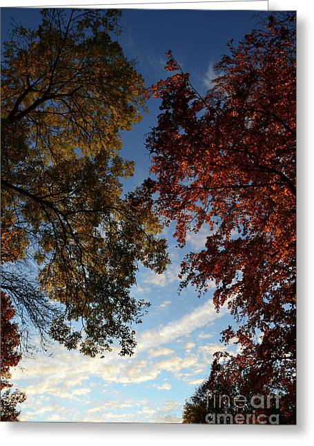Autumn Sheets Greeting Cards - Tree Top in Autumn Greeting Card by Bruno Santoro