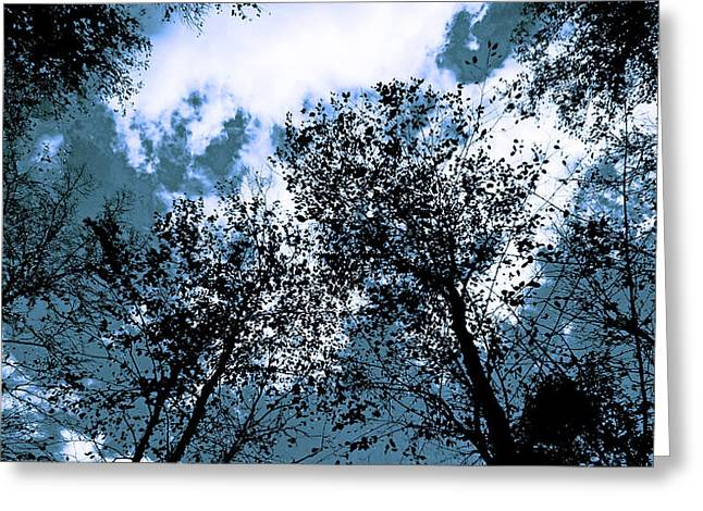 Black Top Greeting Cards - Tree tops Greeting Card by Mary Anne Williams