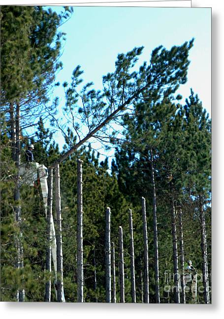 """""""work Crew"""" Greeting Cards - Tree Trimming Greeting Card by Grace Grogan"""