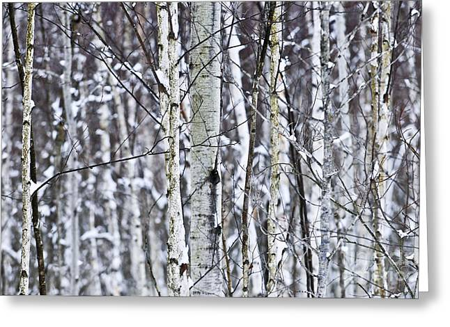 Forest Detail Greeting Cards - Tree trunks covered with snow in winter Greeting Card by Elena Elisseeva