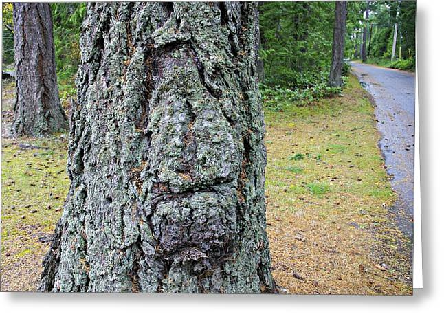 Ent Greeting Cards - Treebeard Greeting Card by Marilyn Wilson