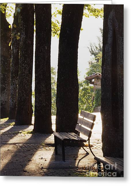 Back Lighting Greeting Cards - Trees and Bench Greeting Card by Jeremy Woodhouse